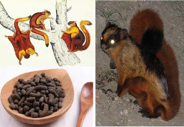 NGŨ LINH CHI - Facces Trogopterum - Nguyên liệu làm Thuốc nguồn gốc động vật
