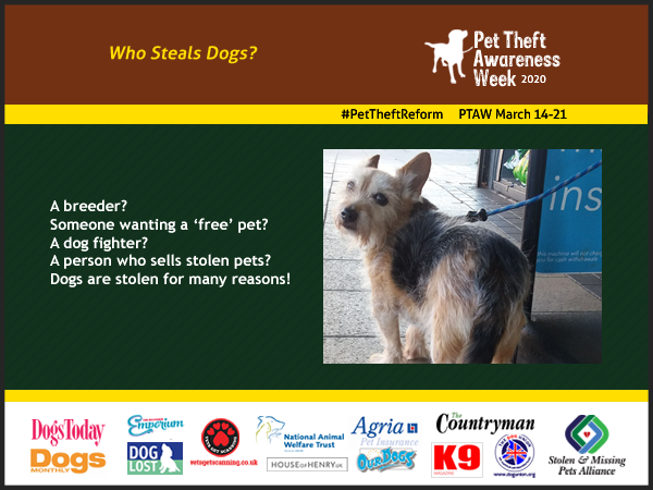 Infographic for the Pet Theft Awareness Week 2020  Who Steals Dogs?