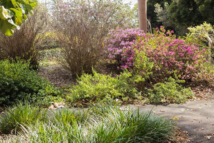 noosa botanics plants