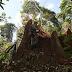 Câmara libera área para exploração na Amazônia equivalente a 3 vezes cidade de SP
