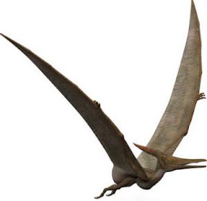 pterosaur ropen - LOS PTERODÁCTILOS AÚN SIGUEN VIVOS