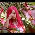 VIDEO | Brown Mauzo - DAWA | Mp4 Download