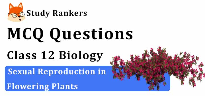 MCQ Questions for Class 12 Biology: Ch 2 Sexual Reproduction in Flowering Plants