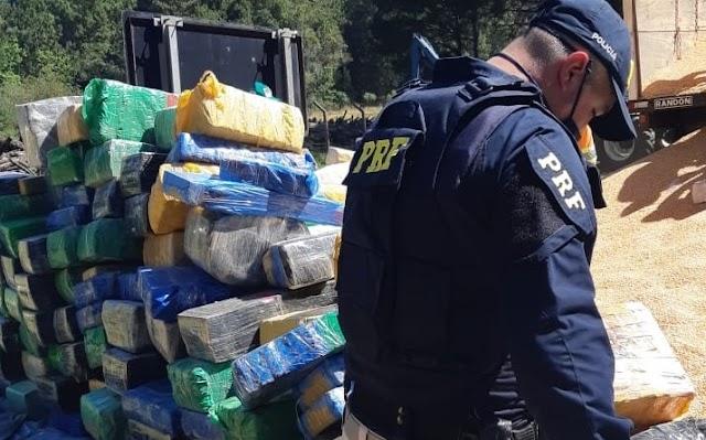 PRF apreende 10 toneladas de maconha escondidas em carga de milho em Irati