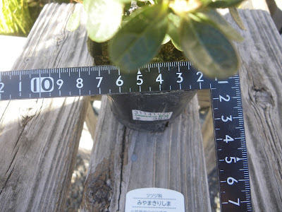 2.5号 直径7.5センチ