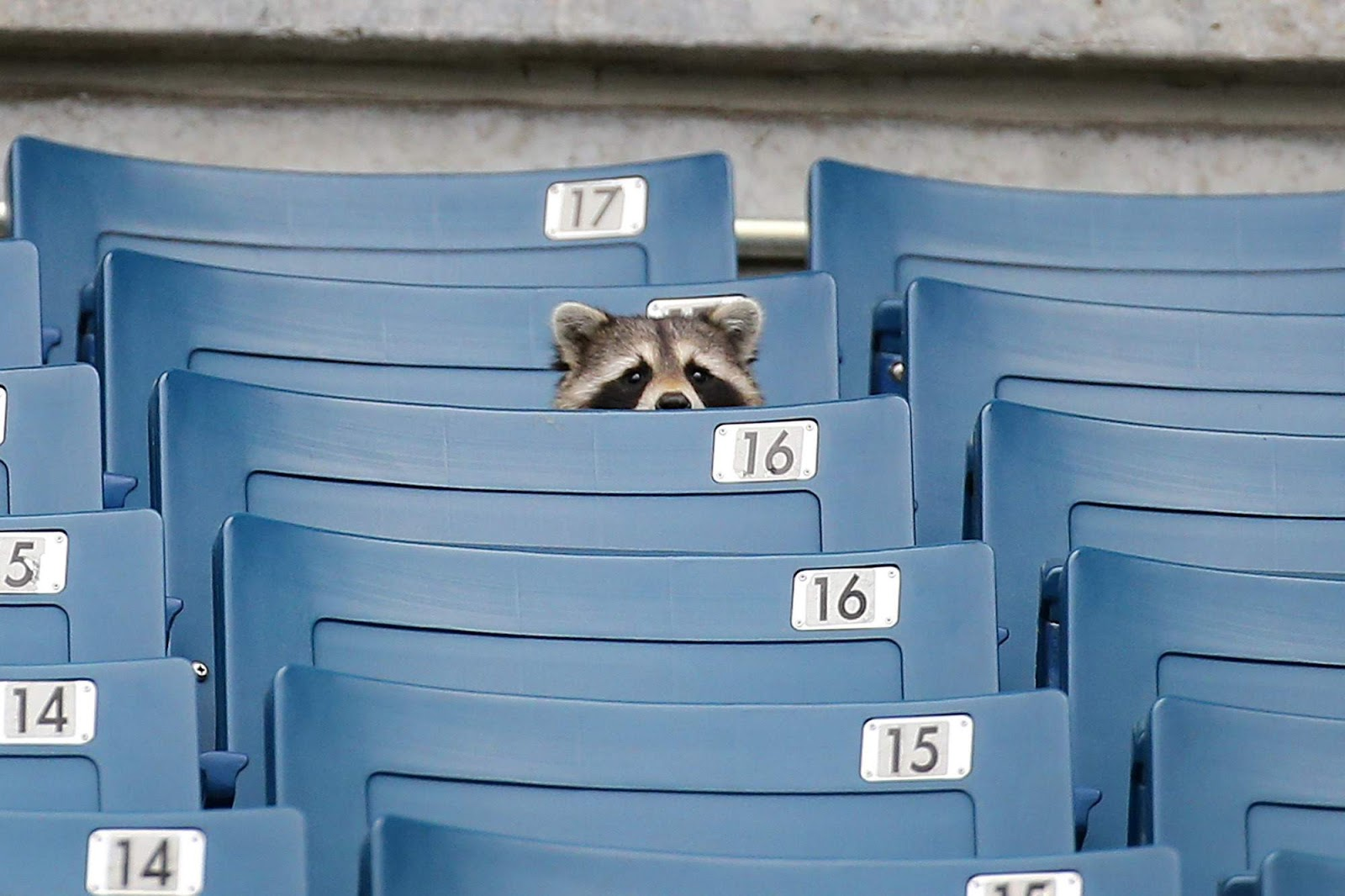 Funny animals of the week - 1 July 2016, funny animal pics, best animal photos, cute animal images