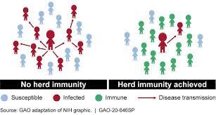 herd immunity meaning in hindi