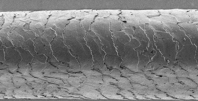 Human hair under a microscope