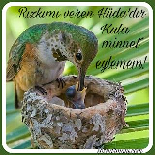 kul, kulluk, kuşlar, minnet etmek, resimli mesajlar, rızık, rızkı veren Hüda'dır, nesimi, minnet eylemem sözleri, minnet eylemem türkü sözleri, türkü sözleri, minnet eylemem facebook