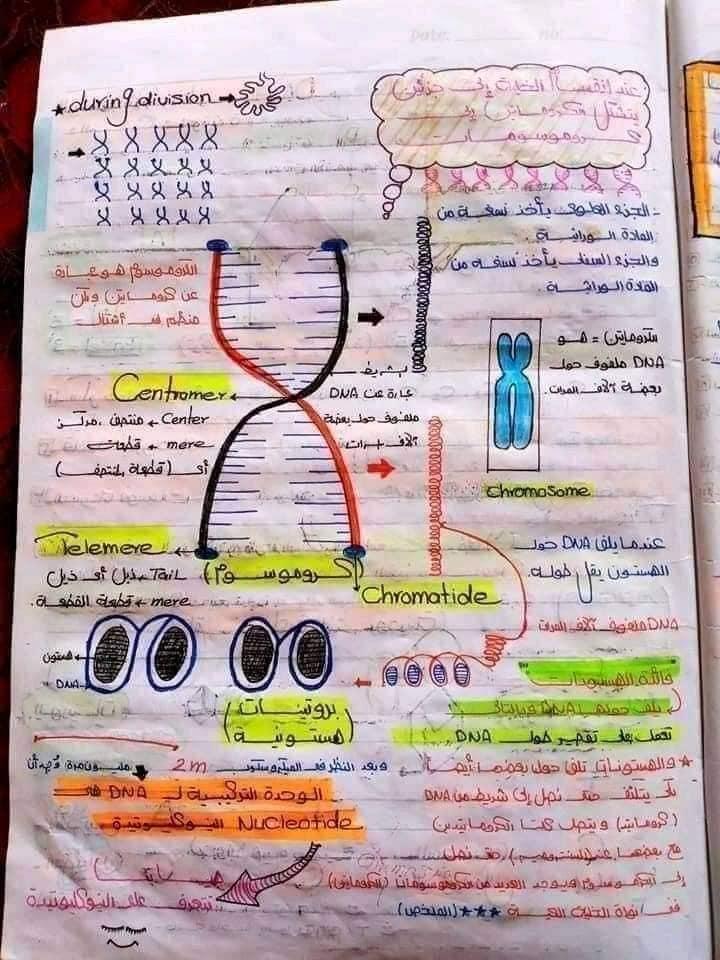 اقوي ملخص DNA تالته ثانوي 13