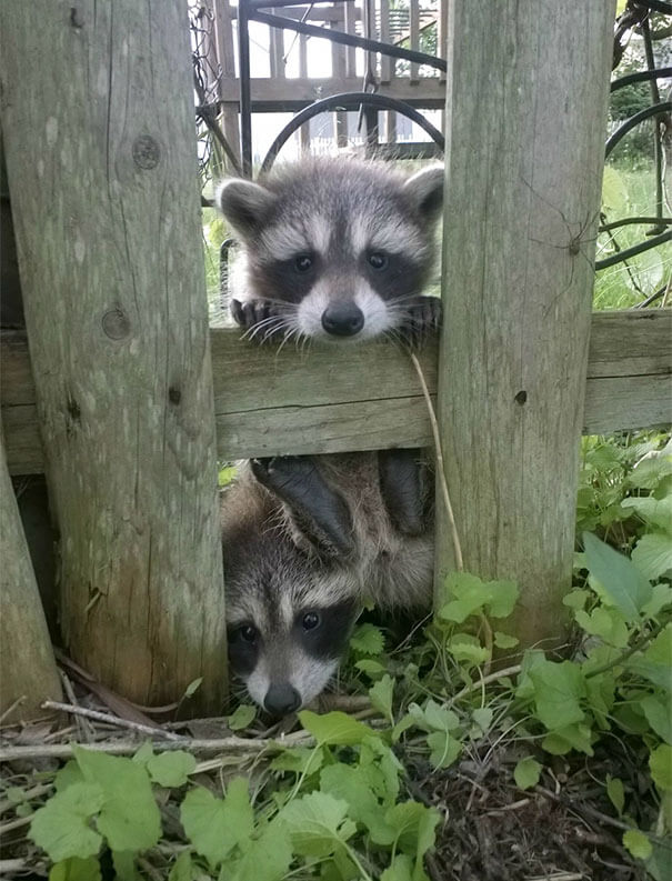 40 Heartwarming Pictures Of Animals - I Just Moved In And Some Neighbors Came By To Say Hi
