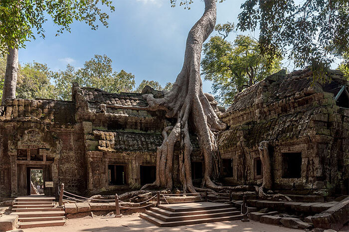 17 Pictures Of Trees That Prove The Miracle Of Life - Ta Promh Temple In Cambodia