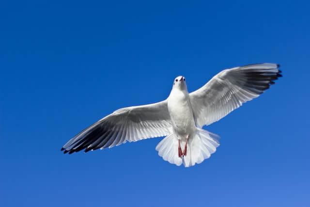 Humanos voar como pássaros