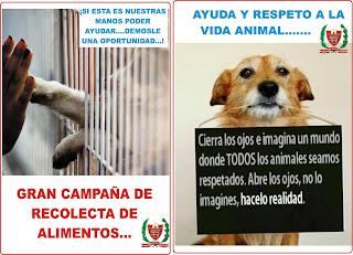 Frases Salva Una Vida Adopta Una Mascota No Compres