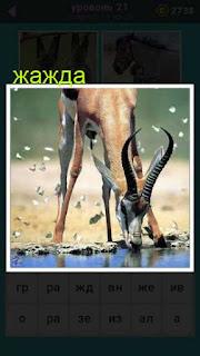 антилопа подошла к воде и пьет воду, утоляя свою жажду ответ на 21 уровень