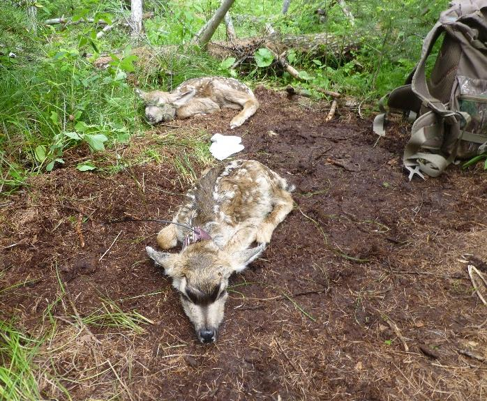 Conservation news webinar long term research to document for Oregon fish and wildlife