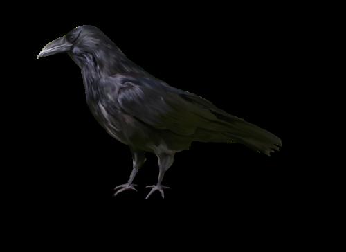 Tubes de cuervovs halloween