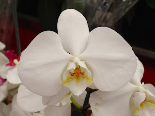 white orchid - http://photography-passions.blogspot.com