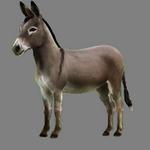 donkey in spanish