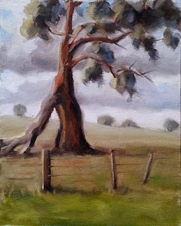 Oil painting of a eucalypt with trees on the horizon and a fence in the foreground.