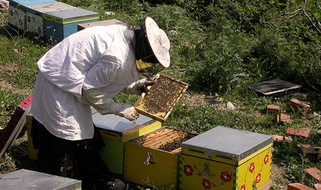 Τοποθέτηση μελισσιών δίπλα σε ηλεκτρική κεραία & χορήγηση δωρεάν ηλεκτρικού φράχτη | Ερωτήση