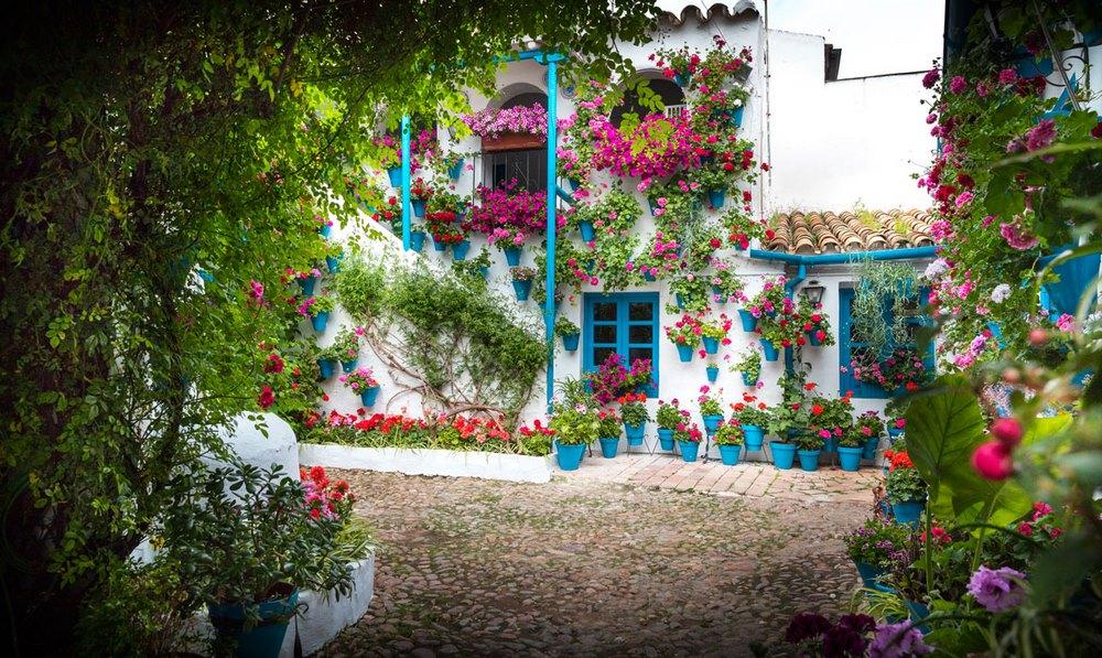 Patio cordobés con paredes blancas llenas de plantas, ventanas, puertas y macetas azules