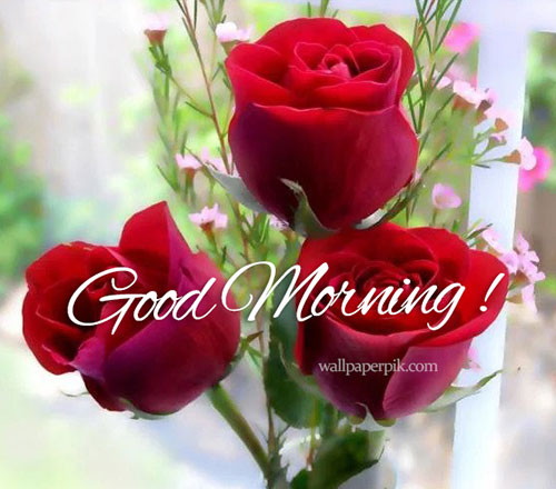 rose good morning image for wish good morning photofor whatsapp good morning images download good morning image 2022 good morning images with positive words good morning images with quotes english  good morning wallpaper  good morning images hd good morning images hindi good morning images free download  good morning images love good morning wallpaper, good morning pics, good morning pictureshd lovely good morning images