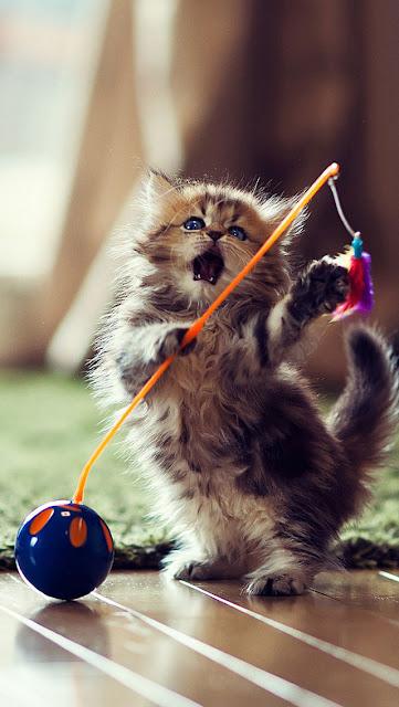 iPhone 5 Wallpaper - Kitten Playing