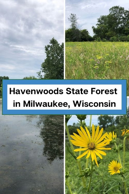 Hum of Frogs and a Prairie Bouquet at Havenwoods State Forest in Milwaukee, Wisconsin