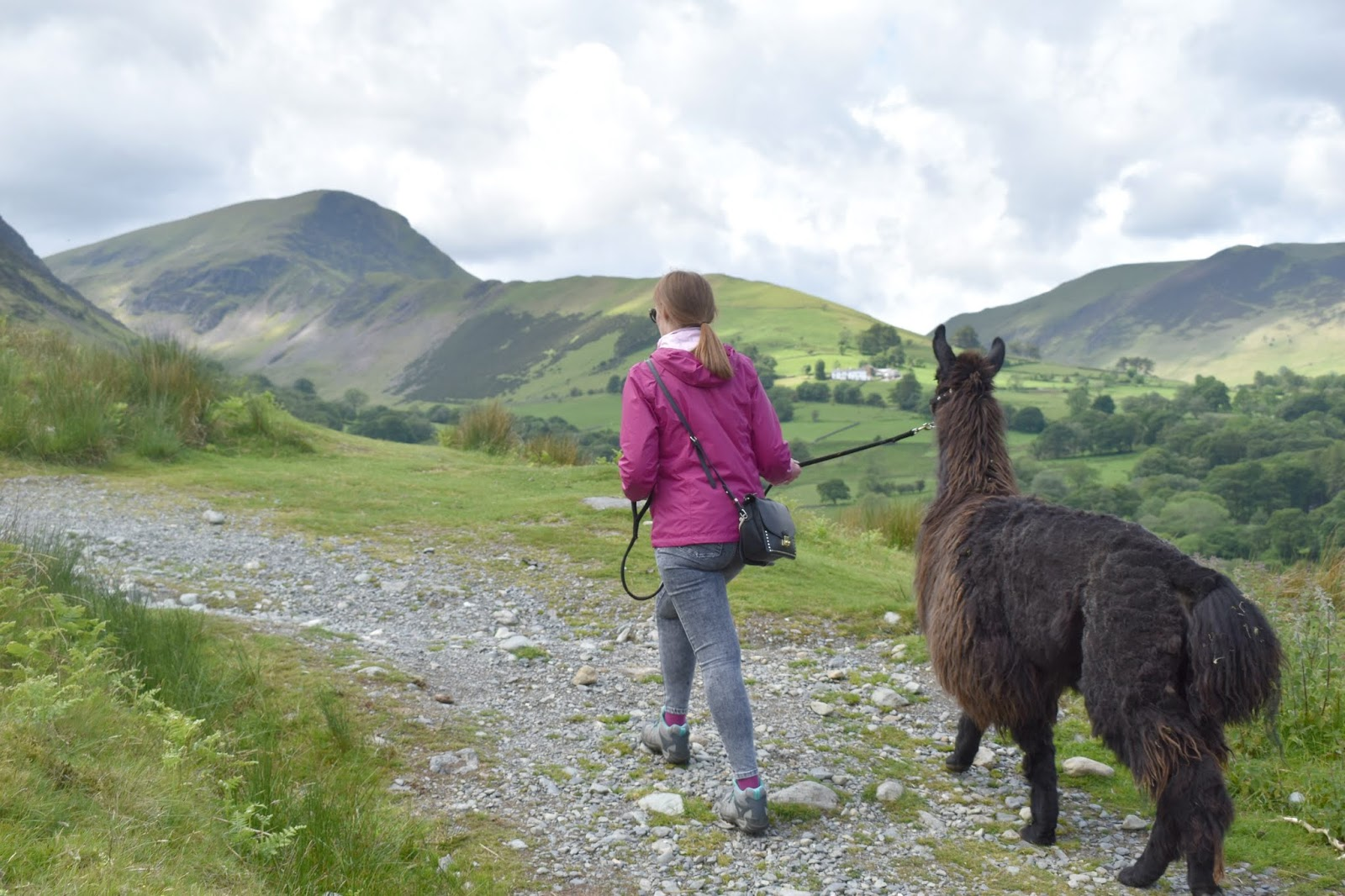 Once Upon a Llama in Lake District - Llama Treks