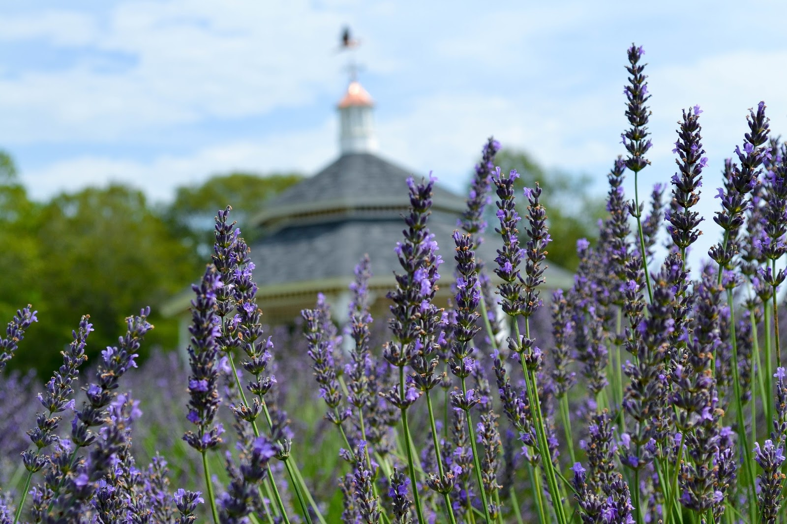 Lavender Pond Farm | Simply Sarah
