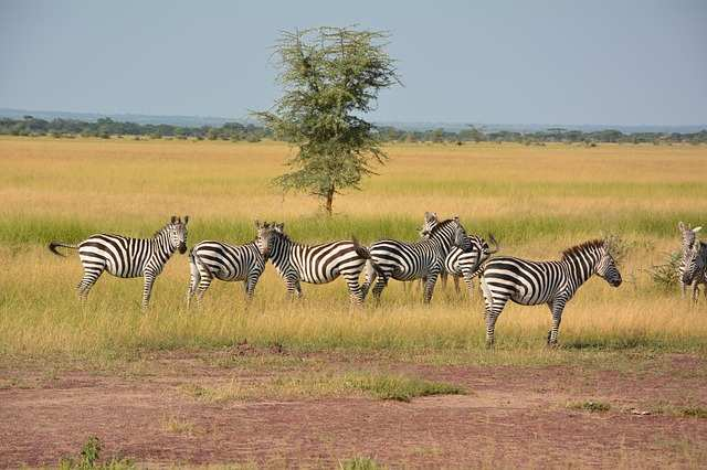 top 10 best places to explore in africa, serengeti national park, serengeti national park tanzania, serengeti national park in tanzania, where is serengeti national park located, where is serengeti national park, map of serengeti national park, serengeti national park map, serengeti national park safari, africa map, africa, african, africa country, african countries, africa flag, african grey parrot, african elephant, africa song, africa twin, africa capital, african union, africa time, africa currency, african parrot, africa jungle,