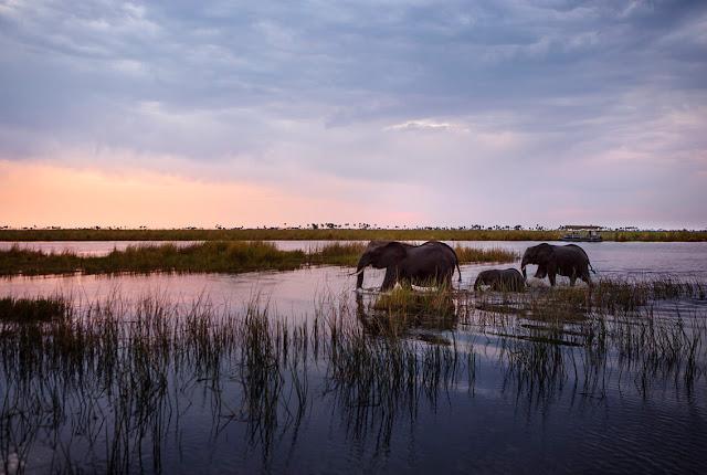 Đồng thời, ở gần khu vườn là ruộng muối Makgadikgadi tĩnh lặng và rất mộc mạc. Khi mùa mưa tới, đây là nơi tụ họp của rất nhiều loài linh dương hay ngựa vằn…
