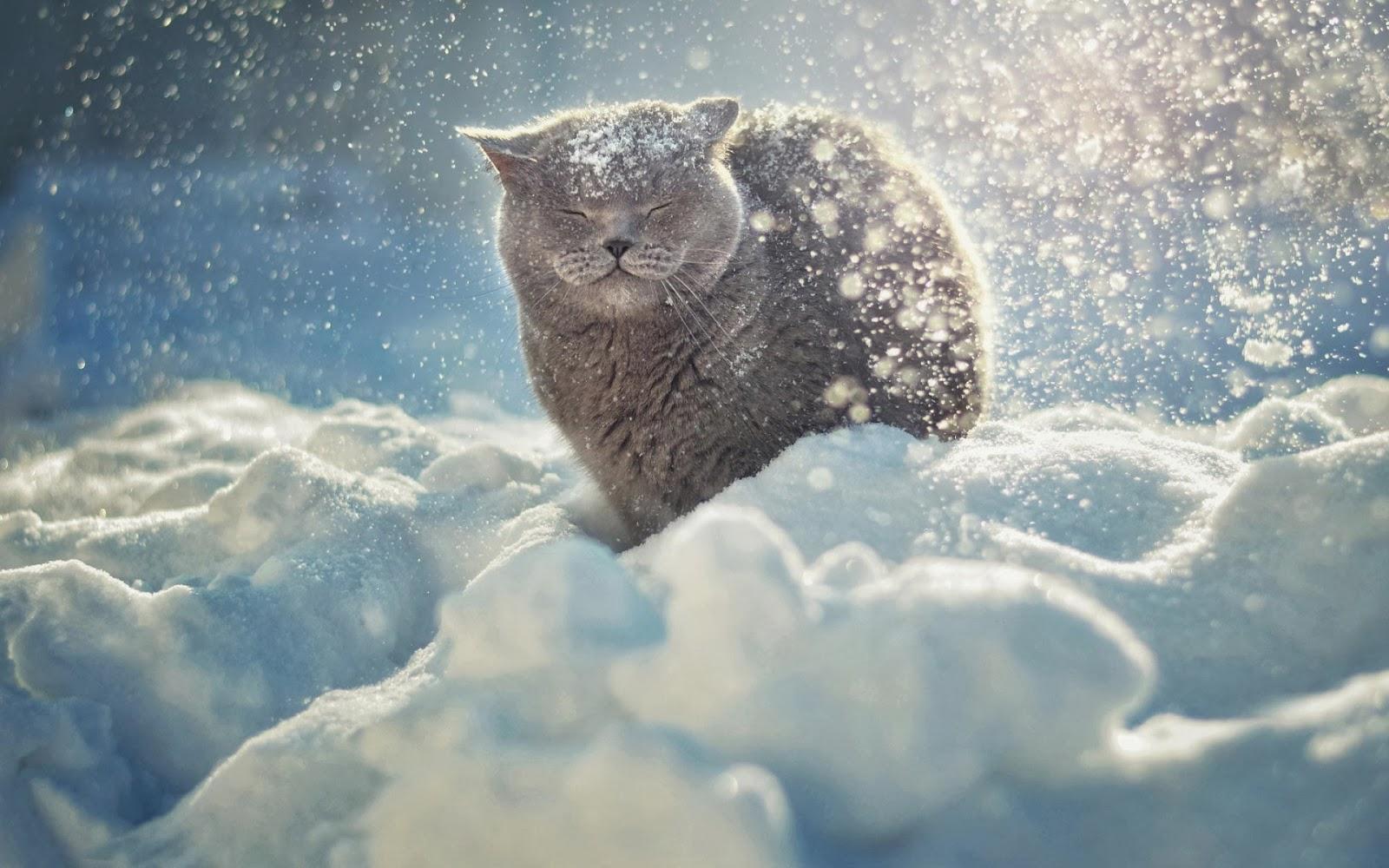 Wallpaper van een kat buiten in de sneeuw tijdens een sneeuwstorm