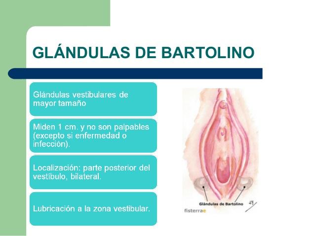 ABSCESO GLANDULA DE BARTOLINO EPUB