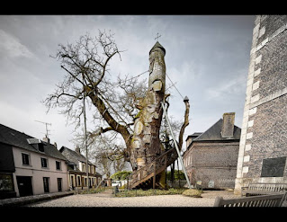 A Old Tree In A Courtyard-The Chapel of Allouville-Bellefosse