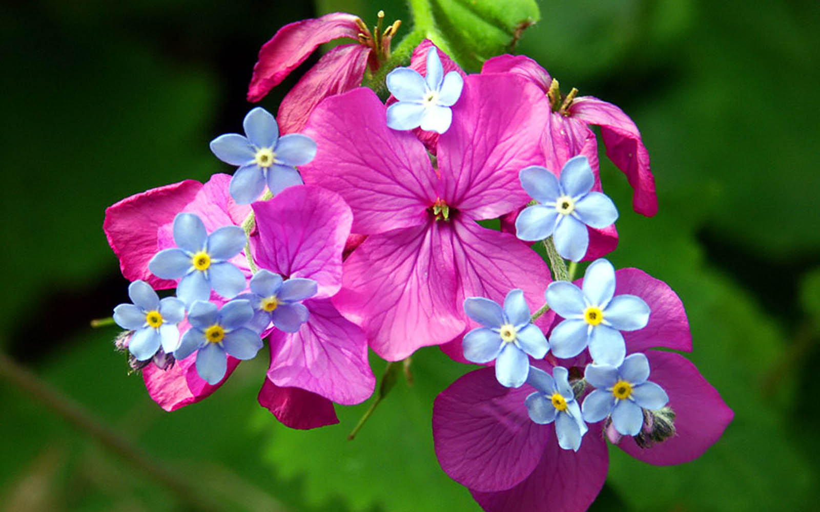 wallpapers: Spring Flowers Wallpapers - photo#47