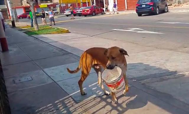 Пес так хотел пить, что начал просить воды у прохожих