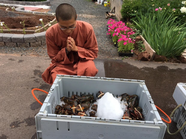 Monks Purchase Hundreds Of Live Lobsters And Release Them To The Ocean