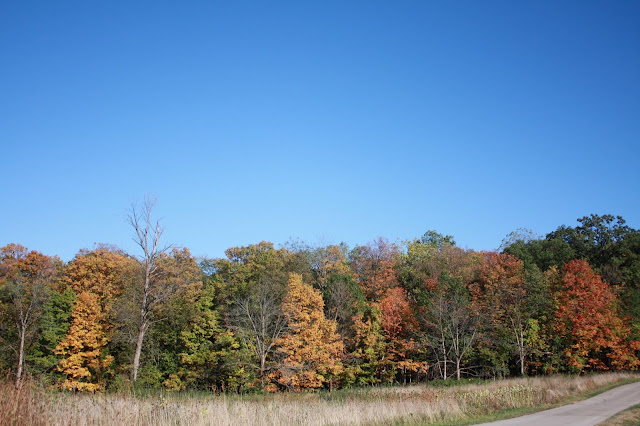 Fall colors popping up at The Morton Arboretum in Lisle, Illinois