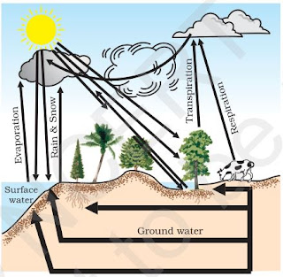 Notes of ch 14 natural resources class 9th science study rankers the whole process in which water evaporates and falls on the land as rain and later flows back into the sea via rivers is known as water cycle ccuart Gallery
