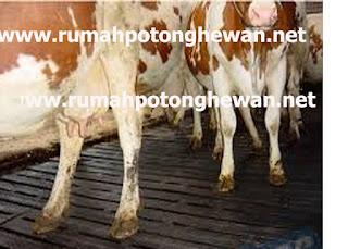 jual cow mat