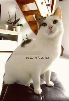 القطط,تربية القطط,فوائد تربية القطط,تربية,معلومات عن القطط,فوائد,فوائد لتربية القطط,10 فوائد لتربية القطط,فوائد تربيه القطط,القطة,عشر فوائد لتربية القطط