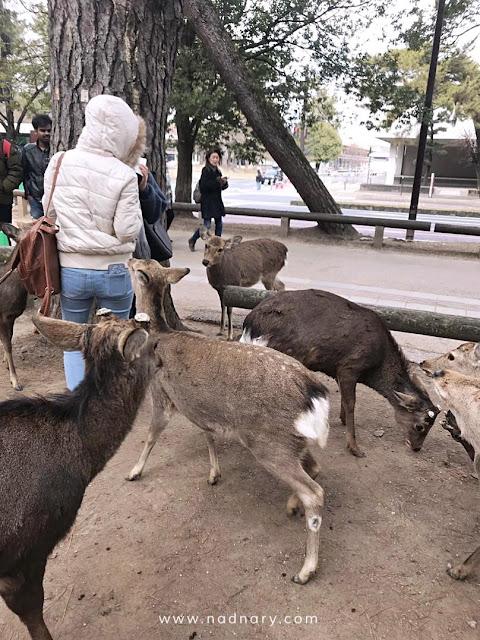 Nara Park, Osaka, Japan