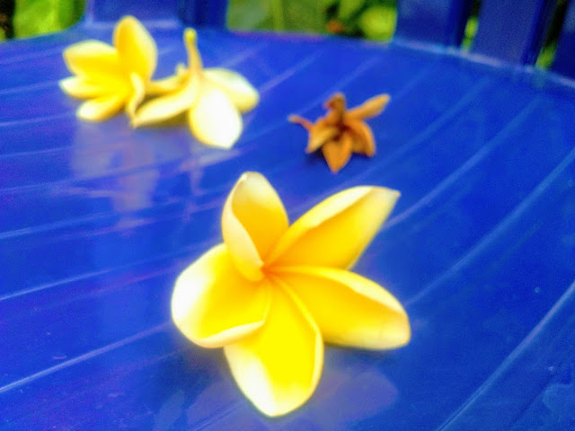 Gardenia Semarang