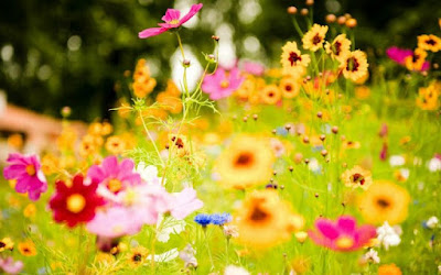 Bunga Dari Surga – Sebuah Cerpen 7 Tahun Silam