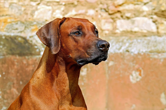 Coronavirus. What all dog guardians must know