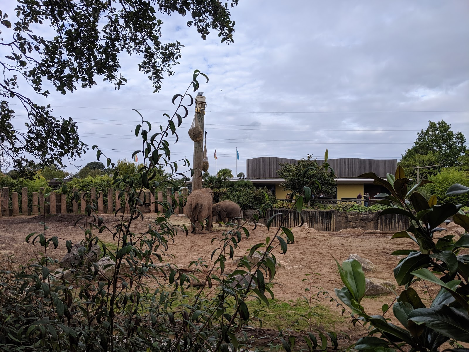 Chester Zoo & Blackpool Tower Bus Trip with National Holidays - A Review  - Chester Zoo Elephants