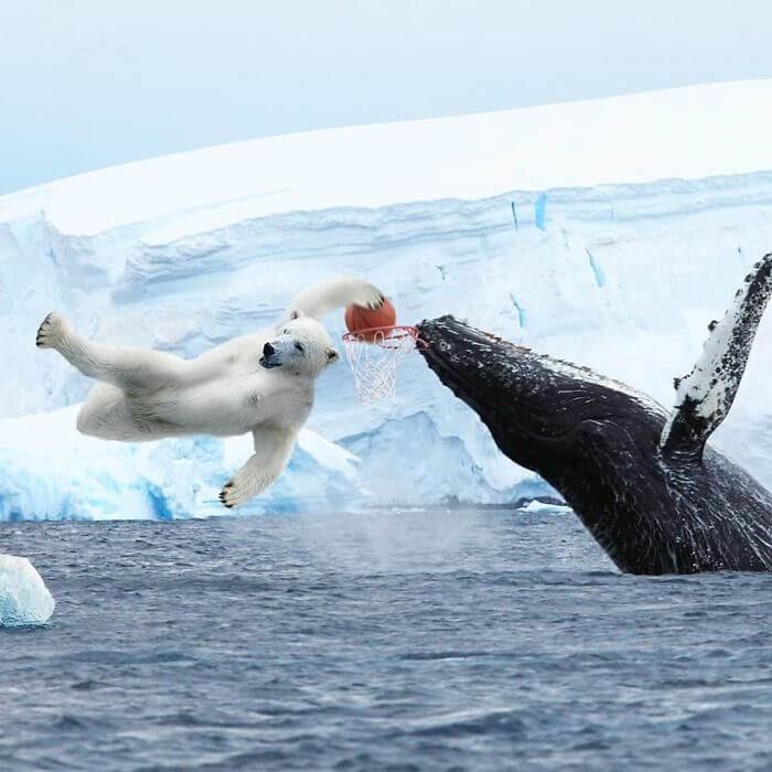 08-Polar-Bear-Dunking-a-Whale-Archipelago-Martijn-Schrijver-www-designstack-co