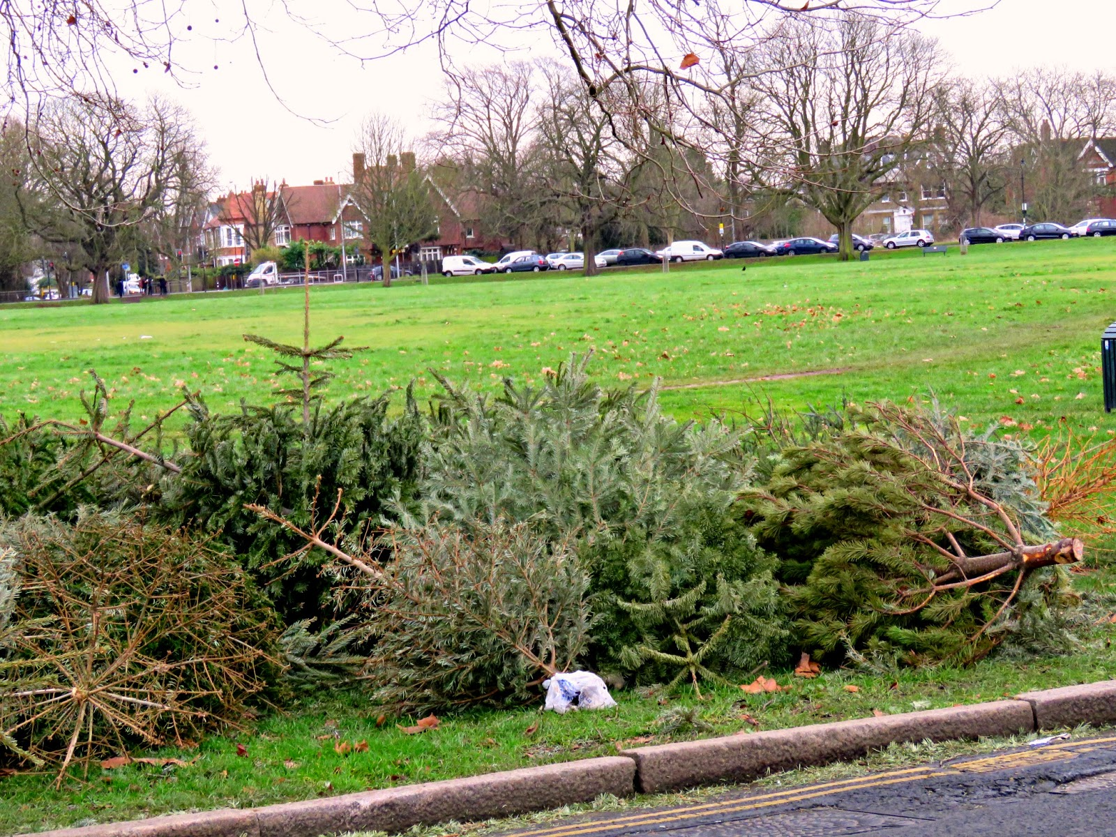 Refuse Collection of Christmas Trees